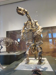IMG_2669 (Brechtbug) Tags: 2019 prehistoric sloth other type skeletons hanging american museum natural history 79th street central park west new york city statue president sculpture african native indian nyc 12152019 bone bones skeleton prehistory