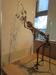 IMG_2697 (Brechtbug) Tags: 2019 prehistoric sloth other type skeletons hanging american museum natural history 79th street central park west new york city statue president sculpture african native indian nyc 12152019 bone bones skeleton prehistory