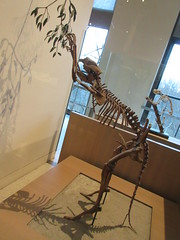 IMG_2696 (Brechtbug) Tags: 2019 prehistoric sloth other type skeletons hanging american museum natural history 79th street central park west new york city statue president sculpture african native indian nyc 12152019 bone bones skeleton prehistory