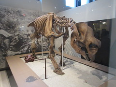 IMG_2694 (Brechtbug) Tags: 2019 prehistoric sloth other type skeletons hanging american museum natural history 79th street central park west new york city statue president sculpture african native indian nyc 12152019 bone bones skeleton prehistory
