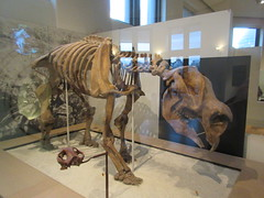 IMG_2693 (Brechtbug) Tags: 2019 prehistoric sloth other type skeletons hanging american museum natural history 79th street central park west new york city statue president sculpture african native indian nyc 12152019 bone bones skeleton prehistory