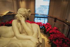 Poinsettia (Mike J Maguire) Tags: batis225 washingtondc christmas nationalgalleryofart holiday