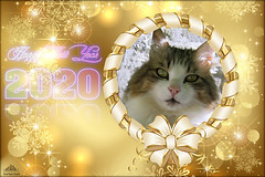 ❅ Happy New Year 2020 ❅ (Xena*best friend*) Tags: boss happynewyear agedcat cats whiskers feline katzen gatto gato chats furry fur pussycat feral tiger pets kittens kitty animals piedmontitaly piemonte canoneos760d italy wood woods wildanimals wild paws calico markings ©allrightsreserved purr digitalrebelt6s canonef70300mmf456isusm flickr outdoor animal pet photo happynewy happynewyear2020 20yrsold vivid sensational