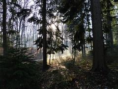 On a perfect day... (joeke pieters) Tags: 1520083 panasonicdmcfz150 molenhoek mookerheide limburg nederland netherlands holland licht tegenlicht backlight bos forest woods ngc npc