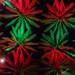 Christmas Palms Tight