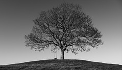 Lonely Tree, Burrow Hill, Somerset (M.T.A.V) Tags: burrowhill somerset hill lonely lonelytree bw blackandwhite blackwhite monochrome sky hump mound canon canoneos750d canon750d photography photograph light black white winter bleak simple simplicity minimal swing
