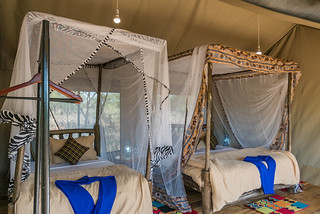 Family Wooden Tent  (4 pax) | Africa Safari Serengeti Central