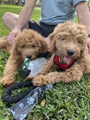 Teddy & Rylie