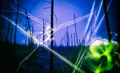 Rapture (Crusty Da Klown) Tags: forest wilderness nature landscape view scenery scene canada britishcolumbia bc colors trees film kodak canon outside outdoors beautiful brilliant art artistic creation format texture contrast lines symmetry harmonious proportion balance transformation theology