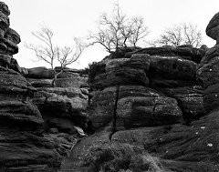 Where the light gets in (Richie Rue) Tags: brimhamrocks nationaltrust yorkshire rocks trees landscape blackandwhite monochrome bnw bw film analogue foma fomafomapan100 ilford perceptol largeformat 4x5 mindfulphotography contemplativephotography outdoors