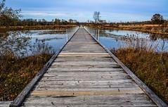 The Wetlands Boardwalk - Beckley Creek Park (tduaneparker) Tags: wetlands lake bridge boardwalk landscapes nature dx sigma1750mmf28os sigma nikond7100 nikon kentucky louisville theparklands beckleycreekpark