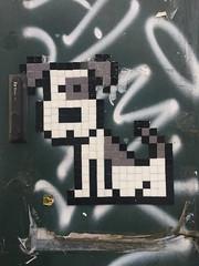 Dog (svennevenn) Tags: streetart bergen gatekunst dogs tiles fliser hunder
