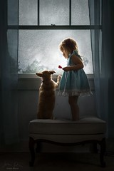 Looking Out ({jessica drossin}) Tags: jessicadrossin toddler child dog pet window rain curtains indoors wwwjessicadrossincom