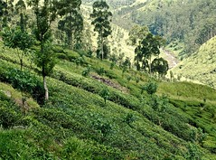 4) Serendipity (The Spirit of the World ( On and Off)) Tags: srilanka ceylon highlands hills hillside landscape green teaterraces tea exports crops trees cool teaplantation
