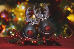 Rudolfs! (Tanya - Hibernating for the winter!!) Tags: festive bauble macro rudolf duplicate flickrfriday