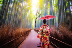Bamboo Forest (anekphoto) Tags: trees scene spring amazing beautiful destinations woods chikurin arashiyama japan japanese road wood landmark day zen natural tree girl sagano bamboo background person plant forest woman color prefecture vertical kimono street place kyoto famous green nature asia asian abstract leaf environment grove china outdoors culture temple garden growth fence serene