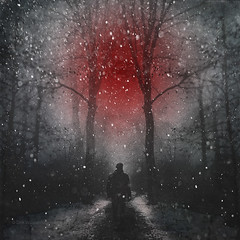 O (Dyrk.Wyst) Tags: redsun conceptual fallingsnow silhouettes darkness surreal wanderer back mystery dreamywinter wuppertal atmosphere blackwhite chilly cold fog forest landscape misty monochrome mood nature outdoors silhouette snow trees wet woods