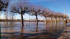 Garonne en crue (laure paquerette) Tags: garonne cruegaronne nature eau lotetgaronne