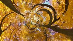 AUTUMN SKY (ajpscs) Tags: ©ajpscs ajpscs 2019 japan nippon 日本 東京 tokyo tokyostreetphotography streetphotography insta360onex 360度カメラ 360°camera 360streetphotography lifein360 tokyo360 tinyplanet shinjuku 新宿 shinjukugyoennationalgarden 新宿御苑 autumn leaves aki 秋 momiji mapleleaves 紅葉 foliage autumnsky