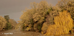 ciel d'orage (studio gimi) Tags: nature ciel orage cormoran couleurs rivière courant arbres artistique beauté