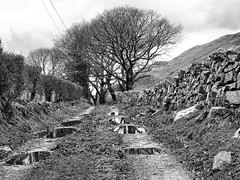 Cwmrhwyddfor puddles (Francis Mansell) Tags: cwmrhwyddfor track tree puddle water reflection wall drystone wales hedge mountain cadairidris