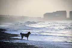 Sundown (plot19) Tags: brighton england uk britain sunrise sea mood plot19 photography beach coast love light landscape seascape seaside winter dog waves east sunset