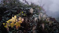 Final Colors Of The Year (Role Bigler) Tags: emmental fujifilmxpro3 fujinonxf56mm112rapd fujinonxf56mm112rapdf12 herbst natur autumn color fall finalcolor forest manfrotto nature schweiz suisse switzerland wald wood