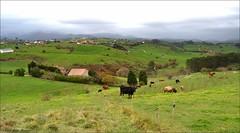Llueve en Cantabria (Luisa Gila Merino) Tags: cantabria vacas paisaje prados maisema pueblo población landscape verde animal nubes camino sendero arboleda hierba árbol green naturaleza otoño