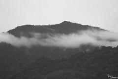 Manu (Kusi Seminario) Tags: cloudforest bosquenublado mountain montaña fog neblina cloudy nublado bw blackandwhite blancoynegro landscape paisaje trees arboles manu madrededios cusco peru southamerica sudamerica amazon amazonia amazonas rainforest selva jungle nature outdoors travel explore perú