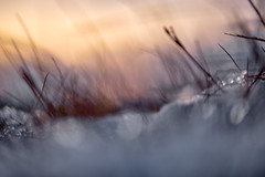 Dawning of winter (tonguedevil) Tags: outdoor outside countryside nature morning dawn moorland field grass snow sky bokeh colour light shadows sunlight sunrise fuji