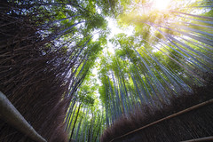 Bamboo Forest near arashiyama river in Kyoto (anekphoto) Tags: trees scene spring amazing beautiful destinations woods chikurin arashiyama japan japanese road wood landmark day zen nenbutsuji tree girl sagano bamboo background person plant forest woman color prefecture vertical kimono street place kyoto famous green nature asia asian abstract leaf environment grove adashino temple culture garden growth fence serene