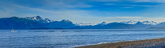 Panoramic View Of Kachemak Bay (http://fineartamerica.com/profiles/robert-bales.ht) Tags: alaska forupload haybales marine people photo places scenic homerspit kenaipeninsula spit kachemakbay boats fishing nickdudiak tide ocean cookinlet campgrounds peninsula glaclier snow halibut salmon fishermen eaglelady beach rocks lowtide mountains alaskaphotography seascapephotography beautiful sensational spectacular magnificent peaceful surreal panoramic wow superb tranquil blue trees snowcap seascape