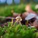 all on my own - Fungus - Hembury Fort, Honiton, Devon - Dec 2019