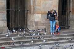 All pigeons on the Dam. (Digifred.nl) Tags: digifred 2019 nikond500 amsterdam nederland netherlands holland iamsterdam straat street city grachten streetphotography grachtengordel damsquare woman child pigeon stairs birds palace vrouw kind duiven trap vogels stad paleis koninklijkpaleisamsterdam