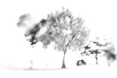 The impressionable tree (alideniese) Tags: famousflickrfive fff multipleexposure bw lensbaby yarrawoodestate victoria australia alideniese andrewscamera