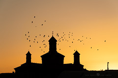 Moyuela - Gallos y palomas (Juan Ig. Llana) Tags: moyuela provinciadezaragoza españa silueta contraluz amanecer naranja palomas bandada aves pájaros vuelo iglesia ermita sanclemente elgallico escultura símbolo