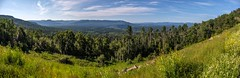 Muskwa Range Panorama (MIKOFOX ⌘ 2020 Vision) Tags: canada meadow showyourexif xt2 forest mountains learnfromexif july landscape provia fujifilmxt2 panorama mikofox summer valley xf18135mmf3556rlmoiswr britishcolumbia steamboat muskwavalley