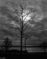 Trees are my models (Uta_kv) Tags: fujinonlens c41 homedeveloped graflex growngraphic filmcamera largeformat fujifilm expiredfuji 4x5