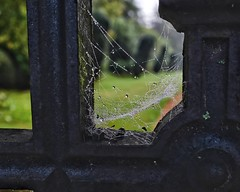 Delicacy and Strength. (margaretgeatches) Tags: dark light green nature cobweb spiderweb web dewdrops decorative ironwork iron gatedetail nationaltrustproperty montacutehouse somerset
