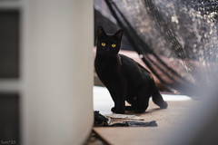 猫 (fumi*23) Tags: ilce7rm3 sony street sonnar sel55f18z sonnartfe55mmf18za a7r3 animal alley zeiss 55mm emount katze cat chat gato neko ソニー ねこ 猫 bokeh