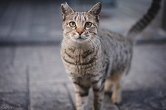 猫 (fumi*23) Tags: ilce7rm3 sony street sonnar sel55f18z sonnartfe55mmf18za a7r3 animal alley cat chat gato neko emount 55mm bokeh dof depthoffield ねこ 猫 ソニー zeiss 路地