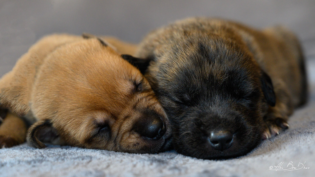 The Worlds Best Photos Of Bébé And Chiot Flickr Hive Mind