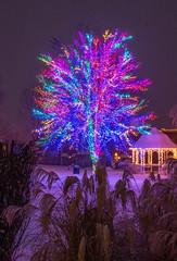 Magic Tree (Nancy King Photography) Tags: night missouri magictree winter columbia snow