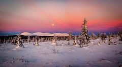 a fell lanscape by moonlight (ikkasj) Tags: sammaltunturi talvikuvia lapland finland winter moon nature lanscape pallasylläs nationalpark