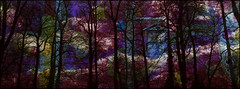 A TREE GROWS IN A MILLION UNHEARD SOULS ... (Zen Beyond the LenZ ☮) Tags: ap poppy poppycocqué zenbeyondthelenz house woods forest trees colours vibrant vibrancy joiedevie joyoflife life joy love friend friends friendship amour art artwork surreal surrealism surrealistic houseinthewoods folly tall talltrees silhouettes contrast winter memories remembrance toinfinityandbeyond simply