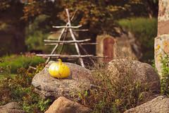 Hobbitville (JaaniicB) Tags: canon 77d 100mm f28l creamy bokeh pumpkin summer warm minerals stones green sun door eos lotr hobbit tolkien