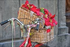 Christmas in  the  street ... (miriam ulivi - OFF/ON) Tags: miriamulivi nikond7200 italia roma natale christmasdecorations bicicletta fiori bicycle flowers