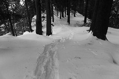 through the winter forest (matwolf) Tags: winter forest foret wald schnee snow nage trees arbres bäume way pfad outdoor blackandwhite monochrome noiretblanc noire blanc schwarzweis ngc winterwonderland natur nature berge montagne mountains