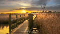 Snape Sunrise (Aron Radford Photography) Tags: yellow snape maltings iken suffolk uk east anglia landscape sunrise dawn reed reeds path pathway