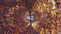AUTUMN GROUND (ajpscs) Tags: ©ajpscs ajpscs 2019 japan nippon 日本 東京 tokyo tokyostreetphotography streetphotography insta360onex 360度カメラ 360°camera 360streetphotography lifein360 tokyo360 tinyplanet shinjuku 新宿 shinjukugyoennationalgarden 新宿御苑 autumn leaves aki 秋 momiji mapleleaves 紅葉 foliage autumnground